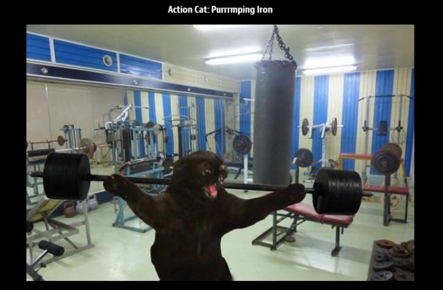 Action Cat pumping iron