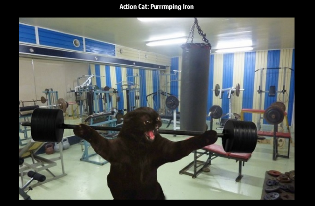 Action Cat pumping iron
