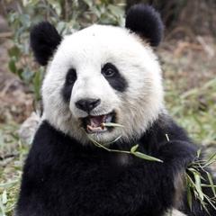 Google Panda Update Tips
